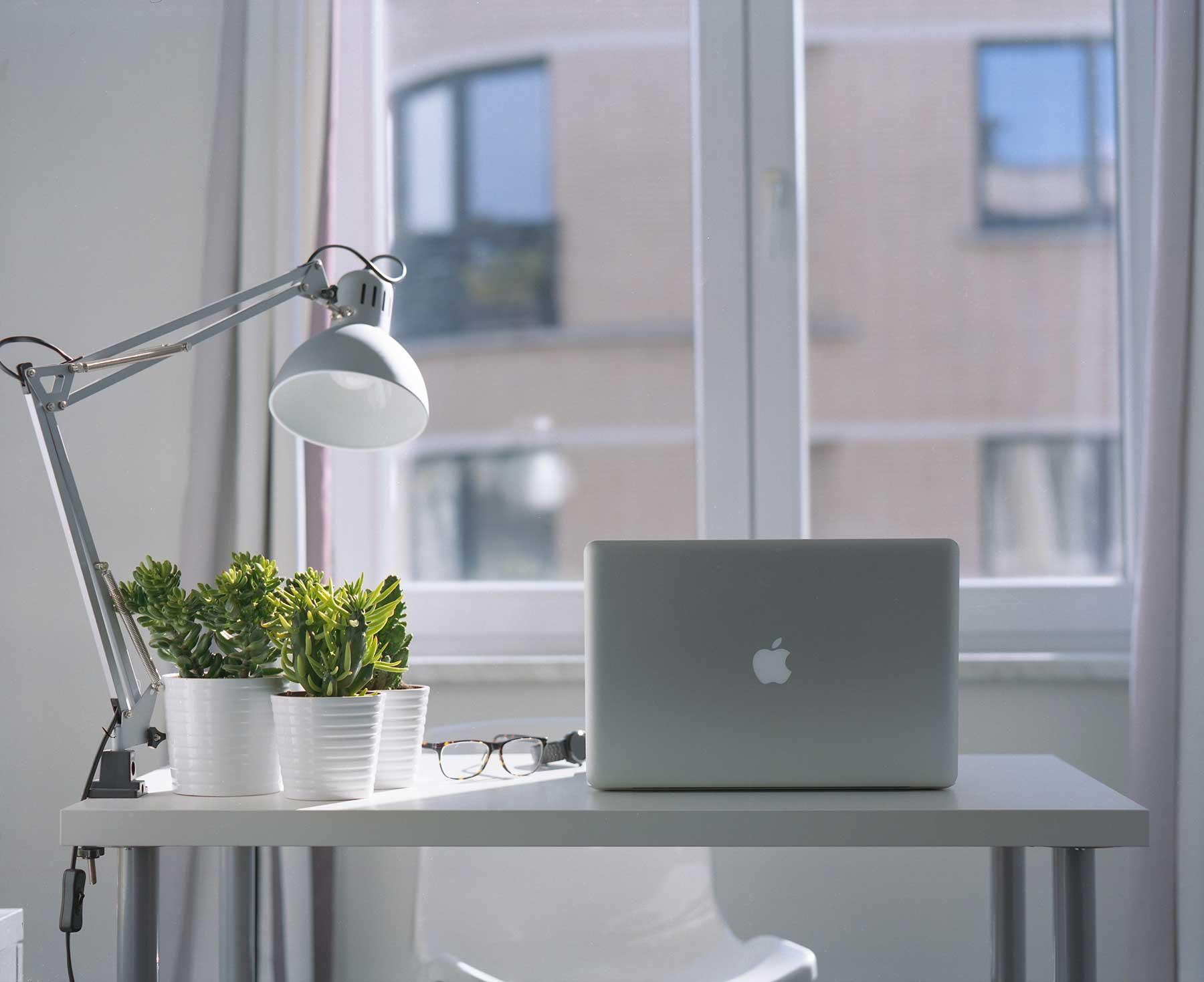 Las mejores plantas para la oficina: crasas y suculentas