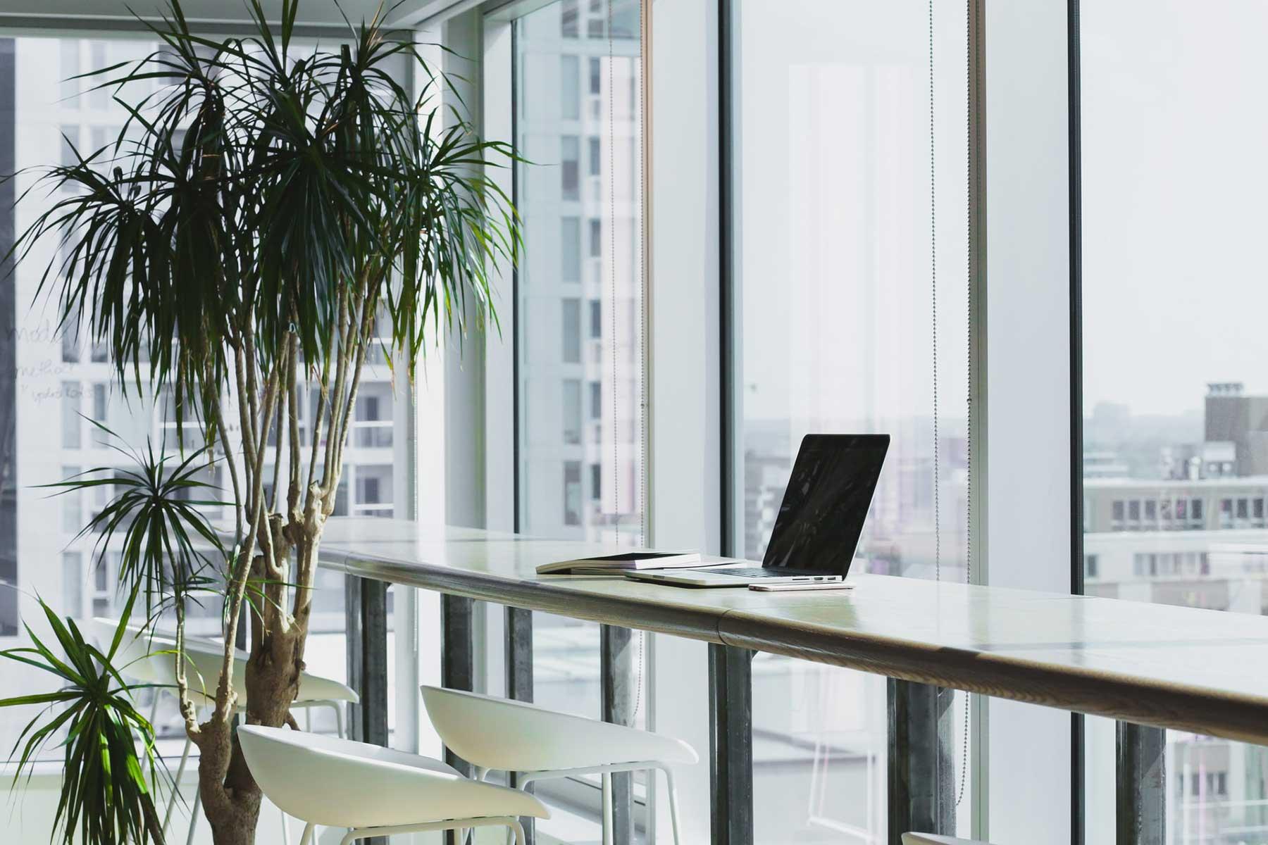 Palmas y palmeras como platas para la oficina