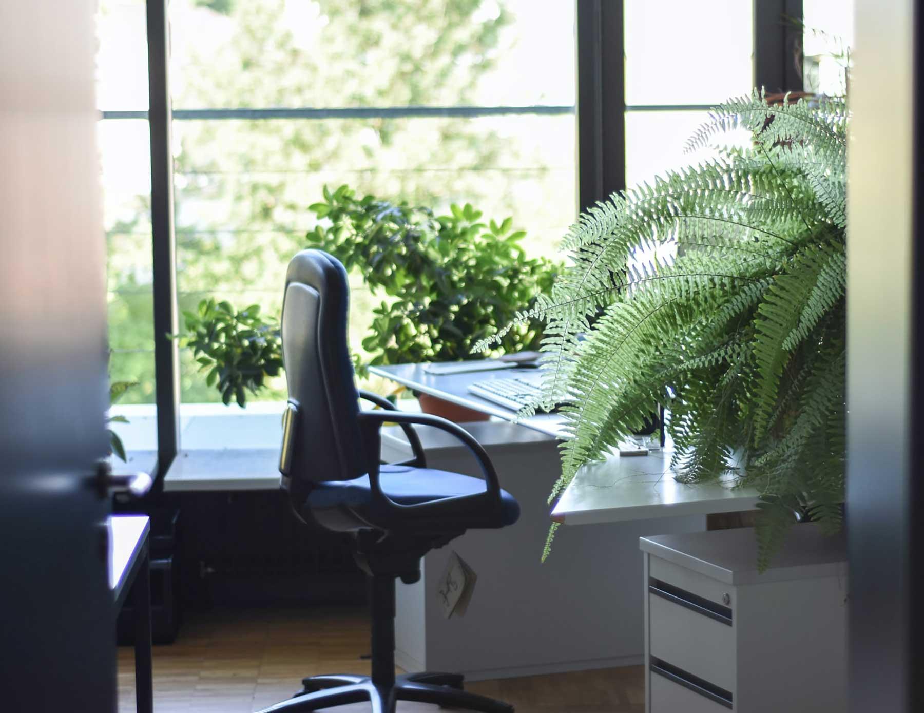 Decorar la oficina con plantas